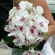Орхидеи и новое увлечение - в подарок на свадьбу