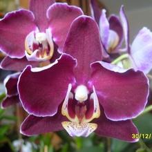 Орхидеи – моя любовь