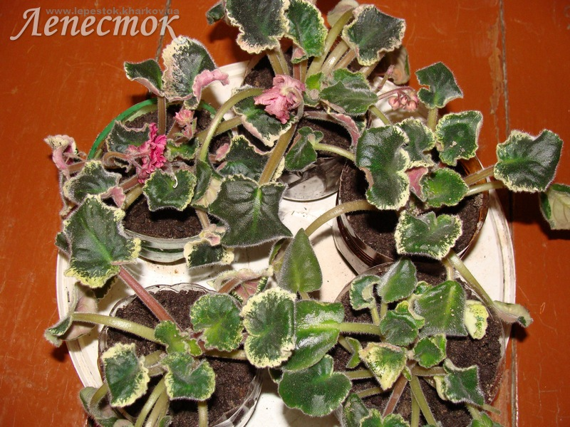 Цена керамические горшки для цветов
