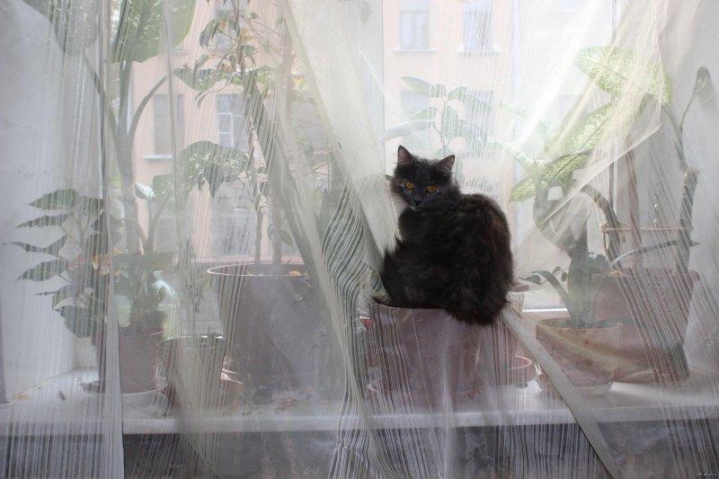 И снова о кошках