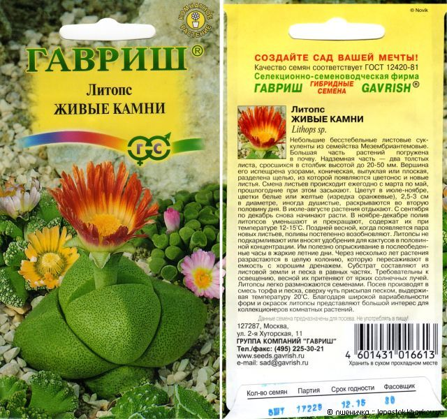 Как вырастить литопс из семян в домашних условиях