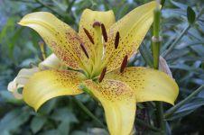 Сад непрерывного цветения: цветущие в июле