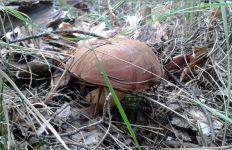 Творение природы - грибы, ягоды, цветочки