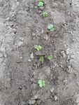 Посевная 2019: что будете сеять, где будете покупать семена