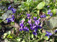 Сад непрерывного цветения: цветущие в марте