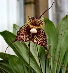 Орхидеи - фото и названия видов и сортов