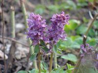 Сад непрерывного цветения: цветущие в апреле