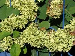 Сад непрерывного цветения: цветущие в сентябре