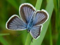 Фото цветочков с насекомыми: Мотылек