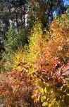 Осенний калейдоскоп