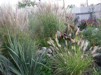 Сад непрерывного цветения: цветущие в октябре