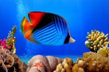 Украшения из бисера: Рыбка - прототип брошки