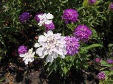 Растения для альпийской горки c фото