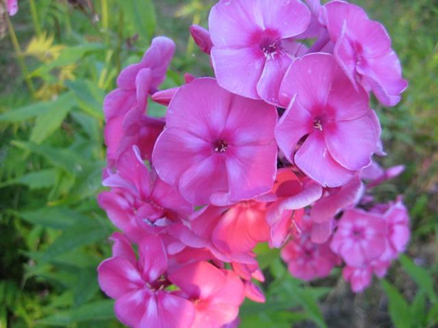 Http lepestok kharkov ua garden img s2011010205 1