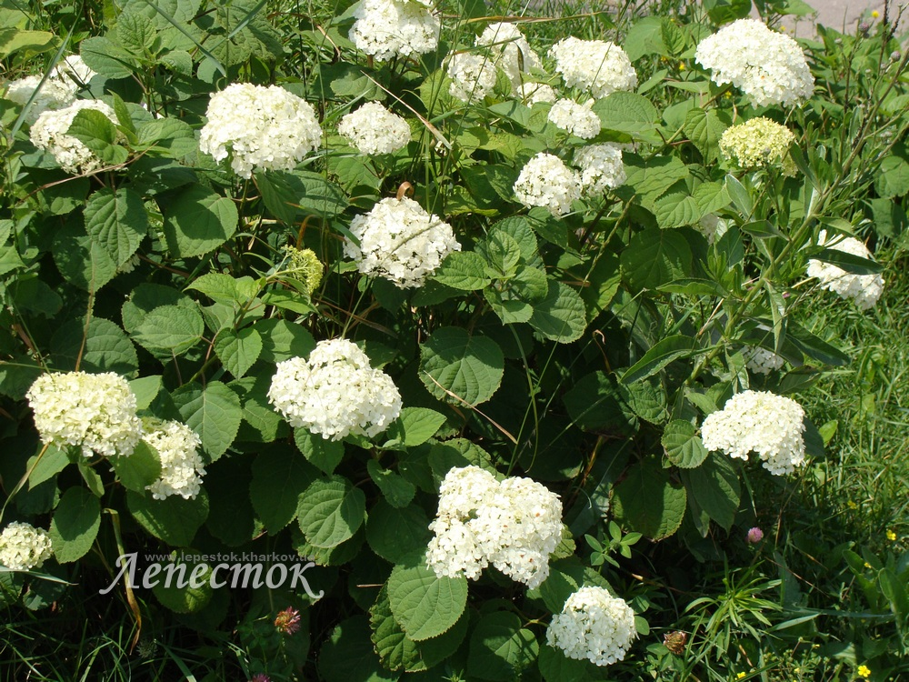 Цветы которые цветут в июле 31
