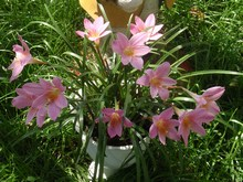 Цветок-выскочка