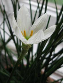Растения которое некоторые цветоводы