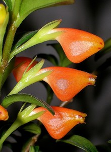 Названия цветов и растений 91