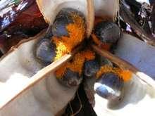 Семена стрелиции теряют всхожесть через 6 месяцев, фото из Интернет