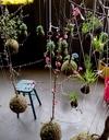 Висячие или струнные сады в Амстердаме