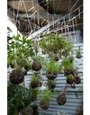 Струнный сад Федора ван дер Фалька