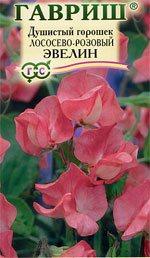 Душистый горошек лососево-розовый сорта Эвелин